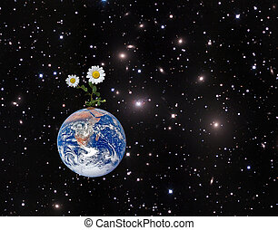 Flower on Earth. Elements of this image furnished by NASA