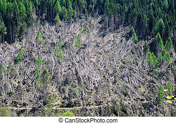 Forest destroyed by storm in South Tyrol