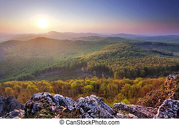 Forest mountain sunset