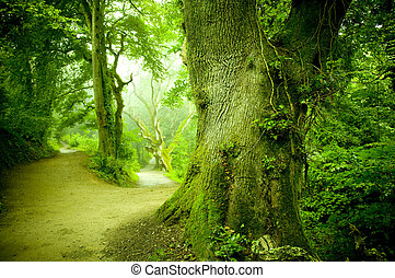 A pathway leading into a forest.