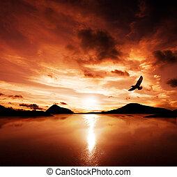 A sea bird flies off into the amazing sunset
