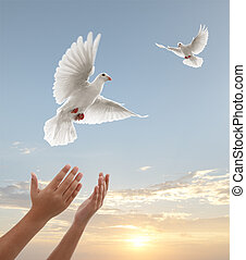 pair of hands releasing white doves during sunset
