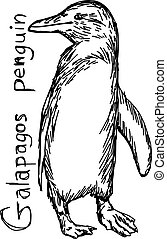 galapagos penguin - vector illustration sketch hand drawn with black lines, isolated on white background
