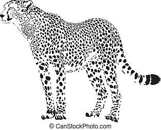 black and white vector illustration stationary cheetah