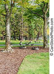 Gesse At Coulon Park 3