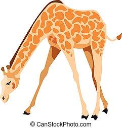 Giraffe Mammal Animal
