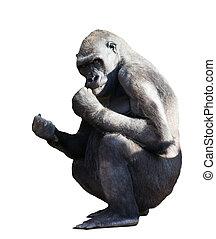 Gorilla. Isolated on white