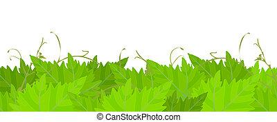 Grape leafs background.