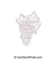 Grape Vine Hand Drawn Realistic Sketch