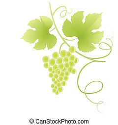 Grape vine.
