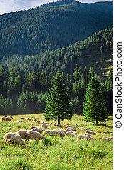 Grazing herd of sheep on green meadow, Tatra Mountains