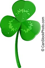 Green shamrock clover leaf with dew drops