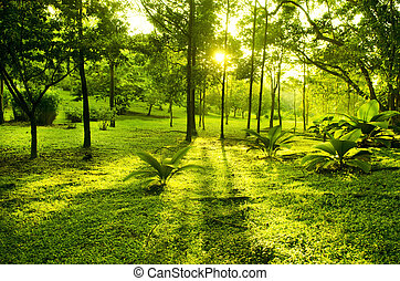Green trees in park, a morning view with backlight