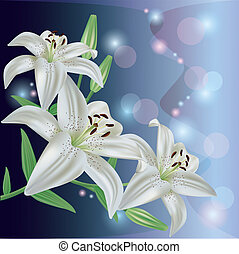 Greeting or invitation card with lily flower, vector