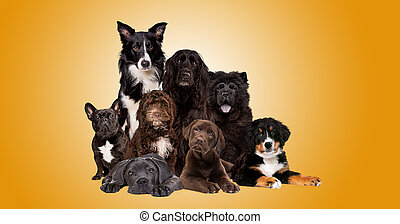 group of eight dogs looking at camera