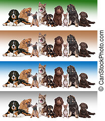 Large group of puppies in front of diverse gradient backgrounds