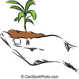 hand hanging plant illustration