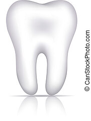 Healthy white tooth illustration, isolated on white.
