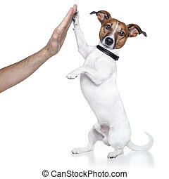 dog with paw high five