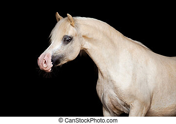 Horse isolated on black.