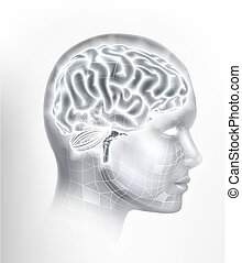 Human Brain AI Head Face Intelligence Concept