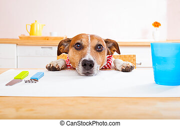 jack russell dog sitting at table begging to eat , tablecloths included