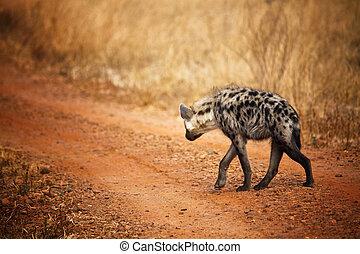 hyena back view