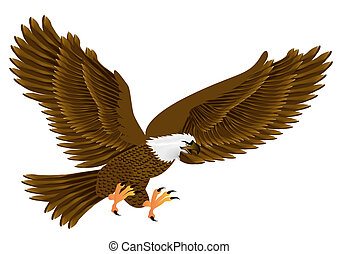 flying eagle insulated on white background