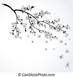 Illustration of flowering branch of Japanese cherry tree