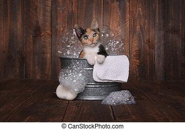 Kittens in Washtub Getting Groomed By Bubble Bath