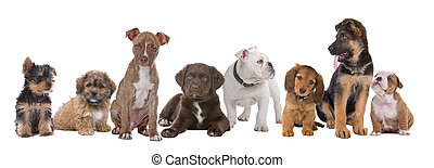 large group of puppies