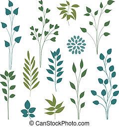 Set of various leaf design elements. Vector illustration.