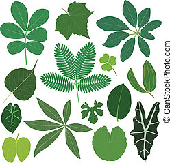 A set of tropical leaves in color.