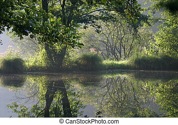 Lovely pond in the morning