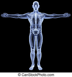male body under X-rays. isolated on black