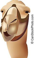 mammal dromedary camel mammal