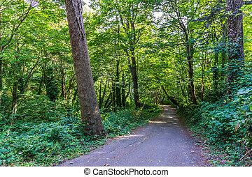Marine View Park Trail 2