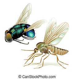 mosquitoes and flies