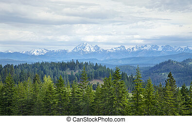 Snowcapped mountains with pine trees in Washington state