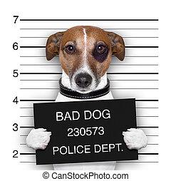 mugshot of wanted dog holding a banner