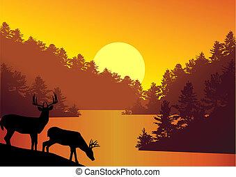 Nature background
