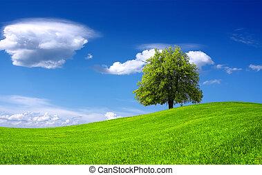 Nature green landscape