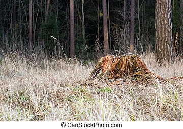 Old ruined stump in the autumn forest