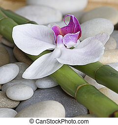 orchid and green bamboo sticks on pebble