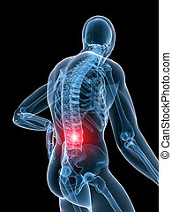 3d rendered illustration of a transparent body with highlighted spine
