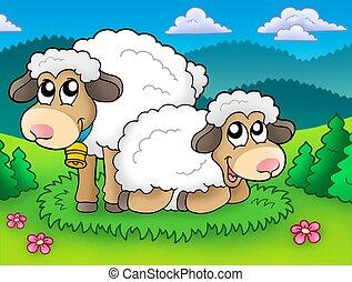Pair of cute sheep on meadow