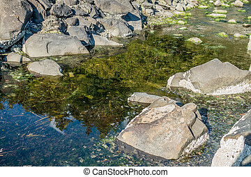 Park Stream Reflection