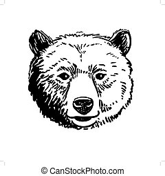 Pen and ink sketch of a bear head