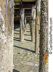Pier Pilings At Low Tide