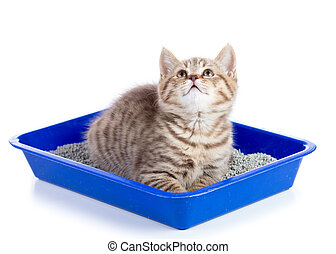 Portrait of a little tabby kitten closeup